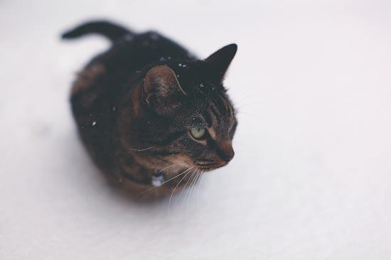 Γάτες στο χιόνι (18)