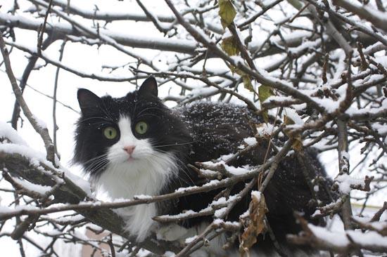 Γάτες στο χιόνι… το έχουν μέσα τους