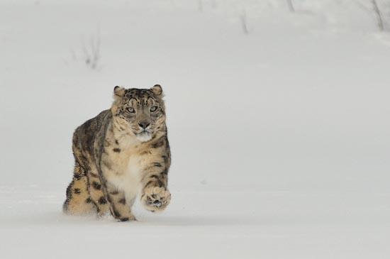 Γάτες στο χιόνι (9)