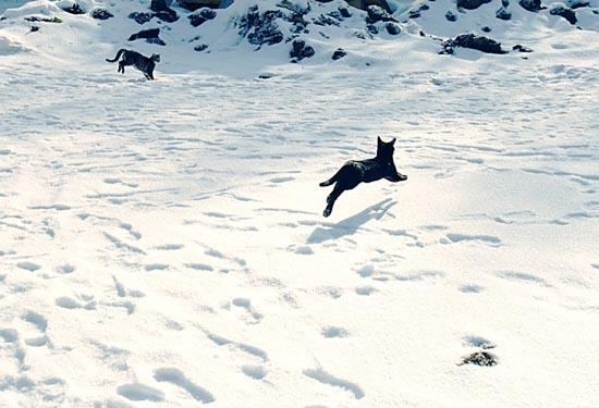 Γάτες στο χιόνι (7)