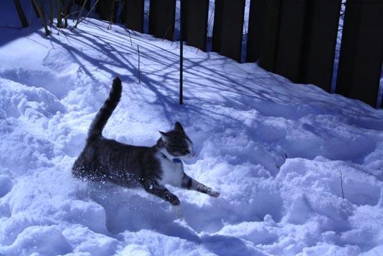 Γάτες στο χιόνι (4)