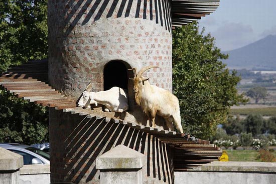 Goat Tower (3)