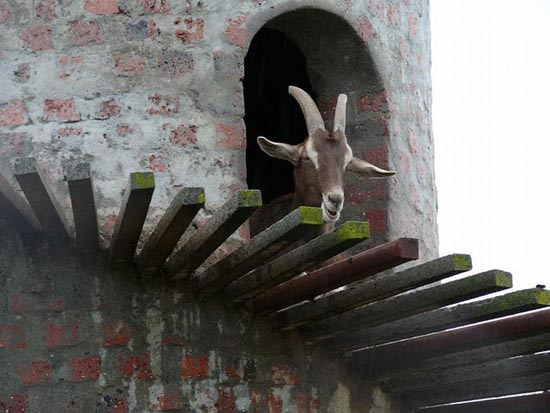 Goat Tower (7)