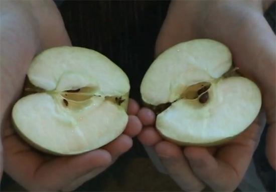 Πως να κόψετε ένα μήλο στα δύο μόνο με τα χέρια σας