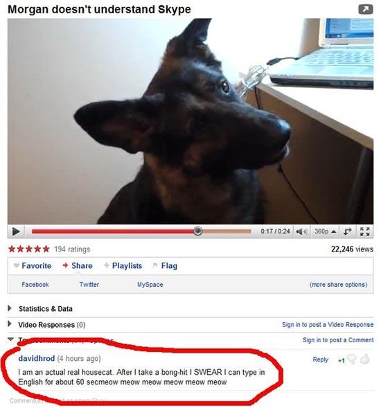 Παράξενα & ξεκαρδιστικά σχόλια στο YouTube (5)