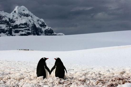 Φωτογραφία της ημέρας: Σαν ερωτευμένοι πιγκουίνοι