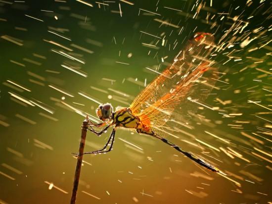 Φωτογραφία της ημέρας: National Geographic Photo of the Year 2011 (1)