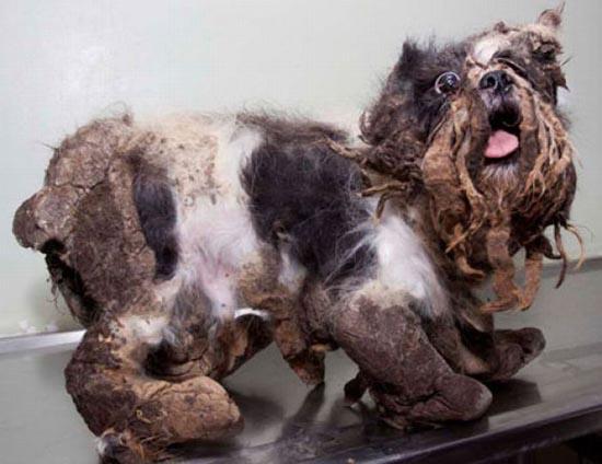 Το πρώτο κούρεμα ενός σκύλου (5)