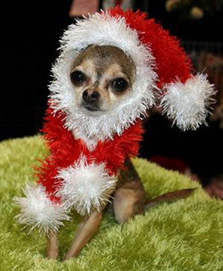 Σκύλοι που μισούν τα Χριστούγεννα (1)