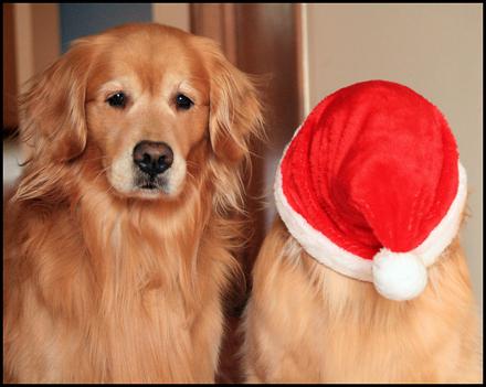 Σκύλοι που μισούν τα Χριστούγεννα (2)
