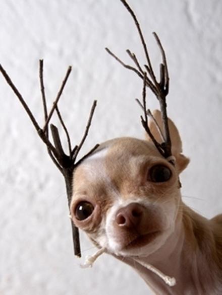 Σκύλοι που μισούν τα Χριστούγεννα (3)