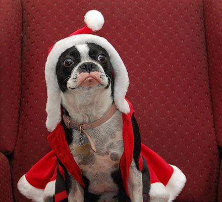 Σκύλοι που μισούν τα Χριστούγεννα (6)