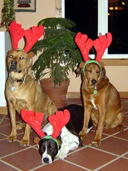 Σκύλοι που μισούν τα Χριστούγεννα (7)