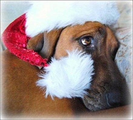 Σκύλοι που μισούν τα Χριστούγεννα (9)