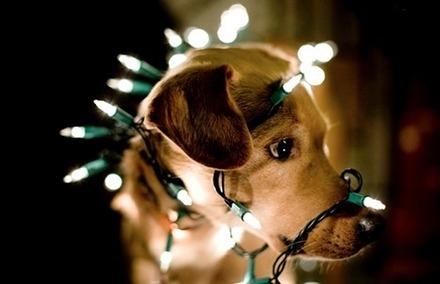 Σκύλοι που μισούν τα Χριστούγεννα (10)
