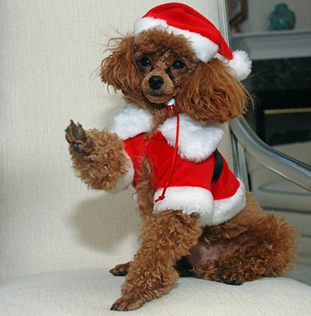 Σκύλοι που μισούν τα Χριστούγεννα (11)