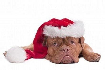 Σκύλοι που μισούν τα Χριστούγεννα (12)