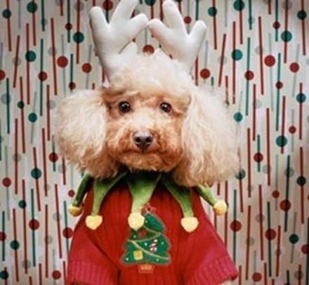 Σκύλοι που μισούν τα Χριστούγεννα (16)