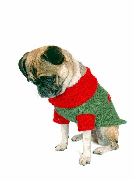 Σκύλοι που μισούν τα Χριστούγεννα (17)
