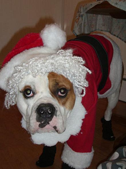 Σκύλοι που μισούν τα Χριστούγεννα (18)