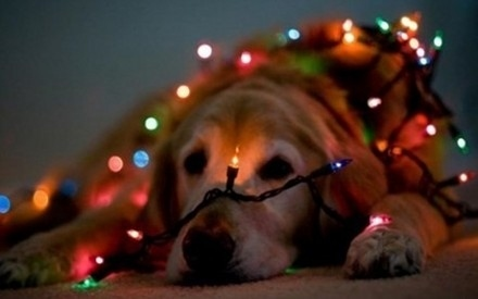Σκύλοι που μισούν τα Χριστούγεννα (20)