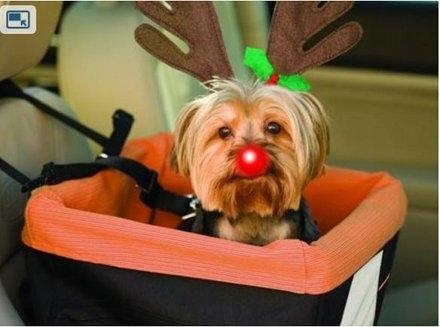 Σκύλοι που μισούν τα Χριστούγεννα (23)