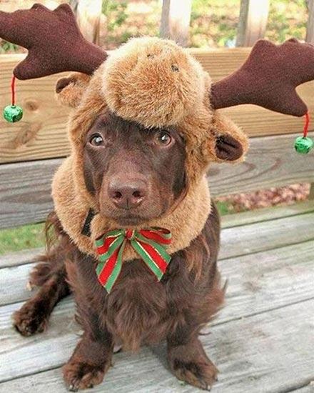 Σκύλοι που μισούν τα Χριστούγεννα (24)