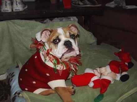 Σκύλοι που μισούν τα Χριστούγεννα (26)