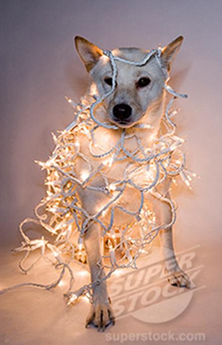 Σκύλοι που μισούν τα Χριστούγεννα (29)