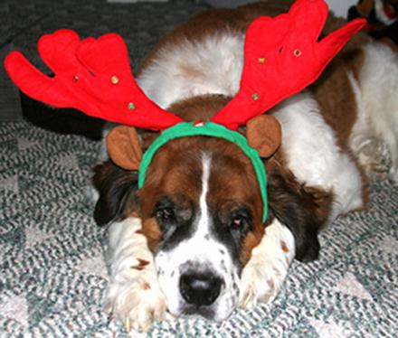 Σκύλοι που μισούν τα Χριστούγεννα (30)