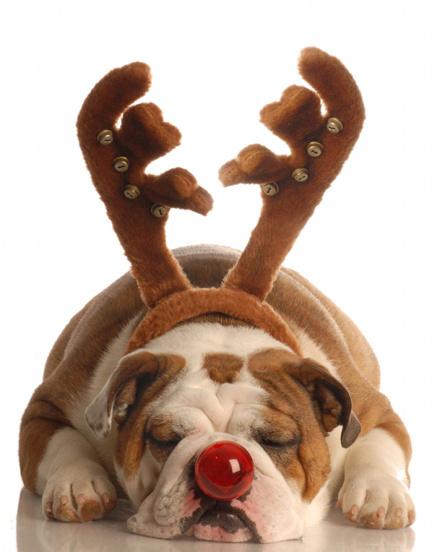 Σκύλοι που μισούν τα Χριστούγεννα (31)