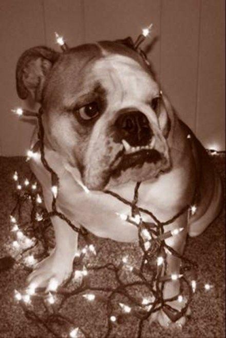 Σκύλοι που μισούν τα Χριστούγεννα (33)