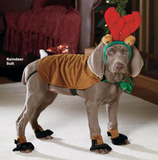 Σκύλοι που μισούν τα Χριστούγεννα (35)