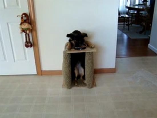 Σκύλος τρώει σε καρέκλα