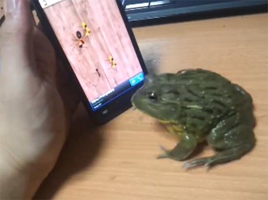 Βάτραχος παίζει παιχνίδι σε tablet