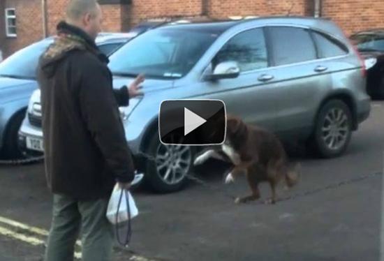 Απίστευτος σκύλος - ακροβάτης