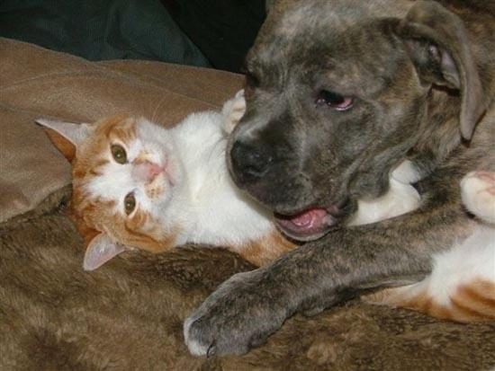Απίθανες φιλίες ζώων (1)