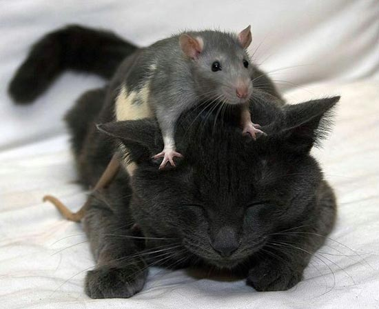 Απίθανες φιλίες ζώων (2)