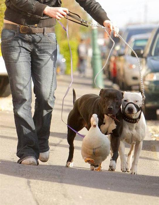 Απίθανες φιλίες ζώων (3)