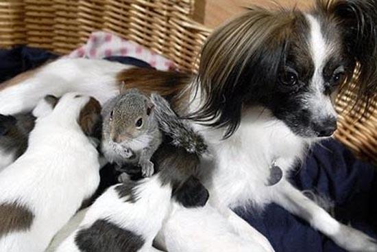 Απίθανες φιλίες ζώων (4)