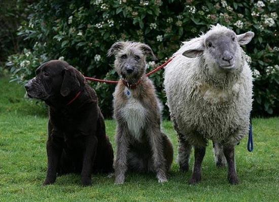 Απίθανες φιλίες ζώων (5)
