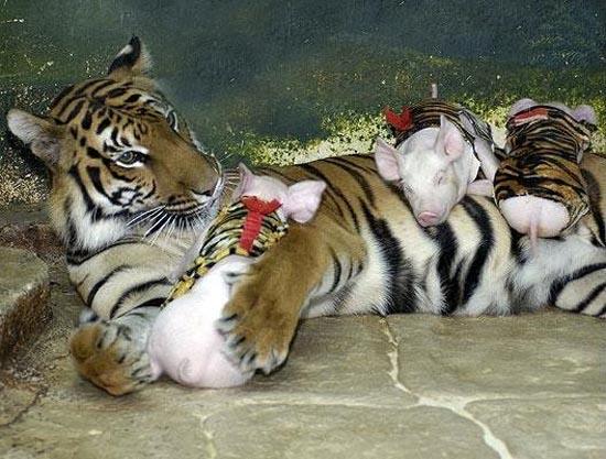 Απίθανες φιλίες ζώων (6)