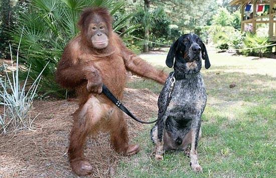 Απίθανες φιλίες ζώων (8)