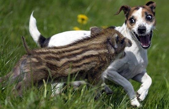 Απίθανες φιλίες ζώων (9)
