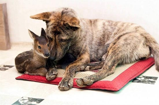 Απίθανες φιλίες ζώων (10)