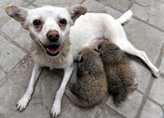 Απίθανες φιλίες ζώων (11)