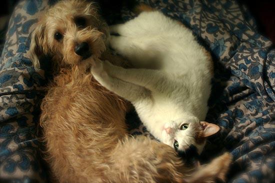 Απίθανες φιλίες ζώων (12)