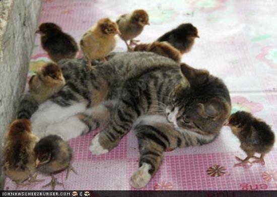 Απίθανες φιλίες ζώων (14)