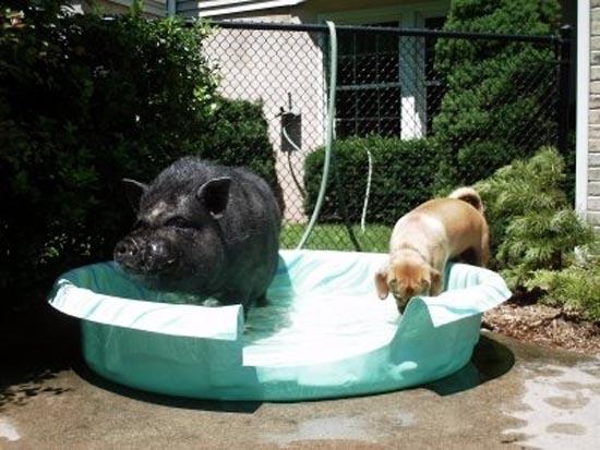 Απίθανες φιλίες ζώων (15)