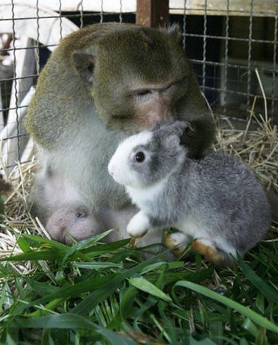 Απίθανες φιλίες ζώων (18)